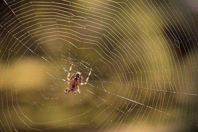 pajęczyna przykładem linkowania wewnętrznego